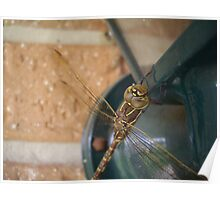 Dragonfly2 Poster