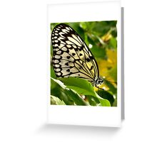 Winged Wonder Greeting Card