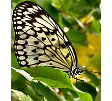 Winged Wonder Photographic Print