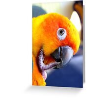 Hmmm....Should I Go Android Or Apple? - Sun Conure NZ Greeting Card