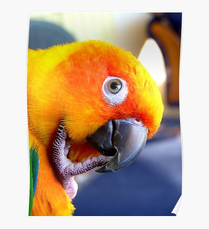 Hmmm....Should I Go Android Or Apple? - Sun Conure NZ Poster