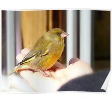 I Wasn't Alone At The End... Green Finch - NZ Poster
