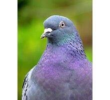 I Am Supposed To Keep Abreast Of Things! Pigeon - NZ Photographic Print