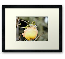 Snow Is One Thing!!..But Wind.. It's Just The CHERRY on Top!! - Silver-Eye - NZ Framed Print