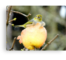 Snow Is One Thing!!..But Wind.. It's Just The CHERRY on Top!! - Silver-Eye - NZ Canvas Print