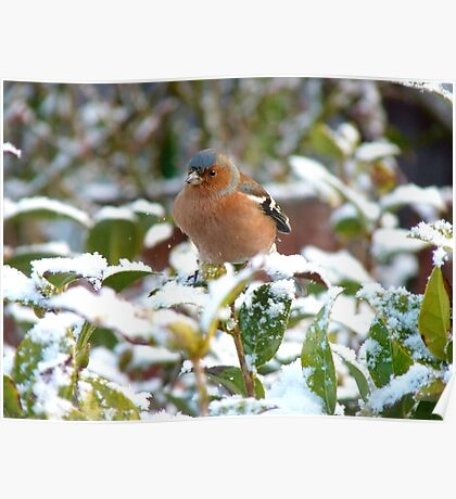 Excuse Me!!...Umm...Is This The Tranquillity Restaurant?..Chaffinch - NZ Poster