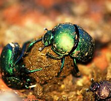 """DUNG-BEETLES"" by Magriet Meintjes"