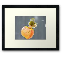 Remind Me Again...Why Is Wind Tunnel Testing Necessary? - Silver-Eye NZ Framed Print