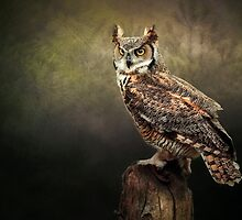 Great Horned Owl by Tarrby