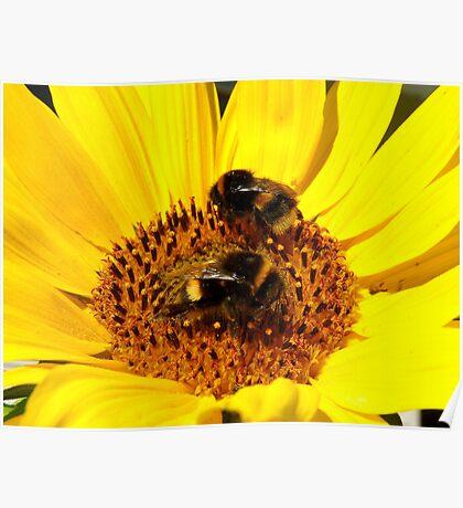 Many Hands Make Light Work!! - Bumblebees - NZ Poster
