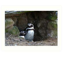 Penguin #2 Art Print