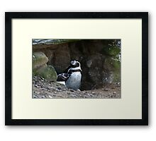 Penguin #2 Framed Print
