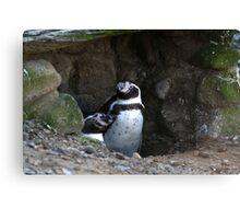 Penguin #2 Canvas Print