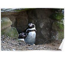 Penguin #2 Poster