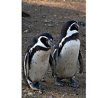 Penguin #3 Photographic Print