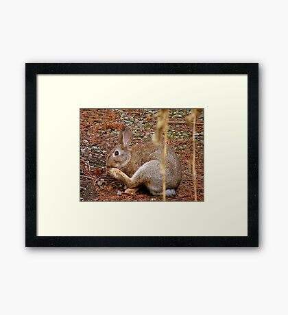 Underfoot Pine Needles Are A Pain In The...Wild Bunny/Hare - NZ  Framed Print