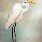 Great Egret by Tarrby