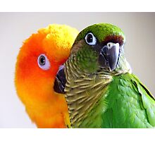 I'm Feeling A Little Camera Shy Bubbles!!...Conure's - NZ Photographic Print