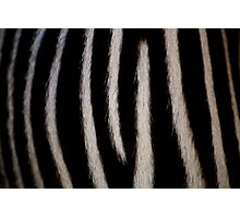 Zebra Markings Photographic Print
