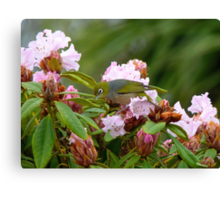 Hey!!..Fred..I've Never Had An Ant For A Friend Before...Silver-eye Rhododendron - NZ Canvas Print