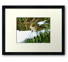 "Gosh!! How On Earth Will I ""FERNish This Place? - Silver-Eye - NZ Framed Print"