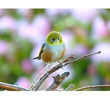 I Wore My Best Waistcoat To Welcome Spring!!! - Silver-Eye - NZ Photographic Print