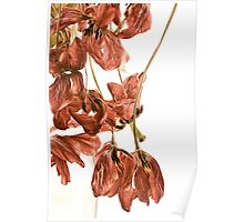 Tangled Tulips Poster