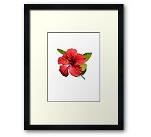 A Red Hibiscus Flower Isolated On White Background  Framed Print