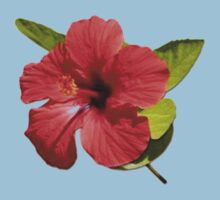 A Red Hibiscus Flower Isolated On White Background  Kids Clothes