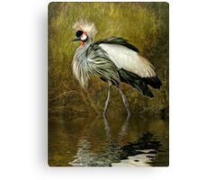 Great Crowned Crane Canvas Print