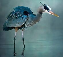 Blue Bayou by Tarrby