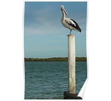 Pelican Pole Poster
