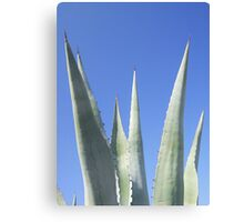 Straight To The Point Canvas Print