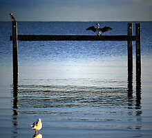 Three Birds by Ben Ryan