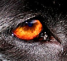 DOG EYE VISION by SofiaYoushi
