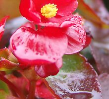 Spring morning dew in Los Angeles, CA USA, (126 Views as of May 19, 2010) by leih2008