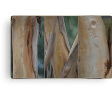 Gum Tree, Canberra,ACT. Canvas Print