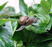 "Snail ""I hate snails"" they eat my flowers""! by leih2008"