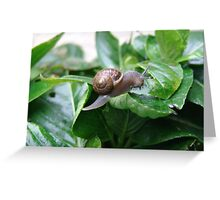 """Snail """"I hate snails"""" they eat my flowers""""! Greeting Card"""