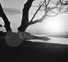 "Sunrise  ""Suncomp012008"". by caroler"