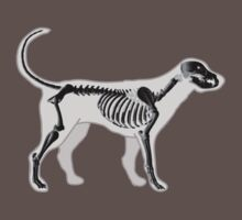 DOG ANATOMY X-RAY by SofiaYoushi