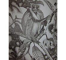 Monkeying Around Photographic Print