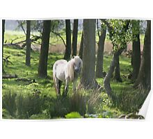 Shetland pony in the wood Poster