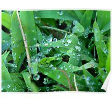 wet grass 1 Poster