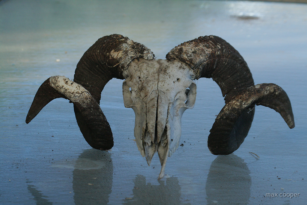rams head  by max cooper