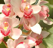 Cluster Of Orchids by Kathleen Struckle