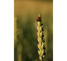 Grain And The Lady Photographic Print