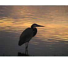 natural profile Photographic Print
