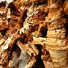 crumble cork decay  by aquabee
