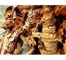 crumble cork decay  Photographic Print